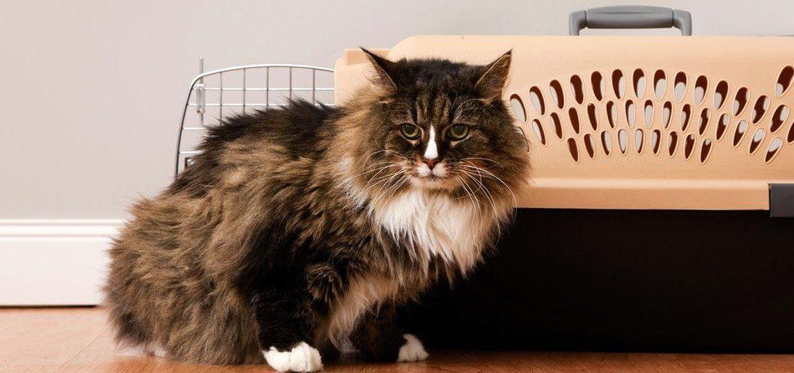 23687_pets_vertical_store_cats_3-_cb313502560_-1-1140x536
