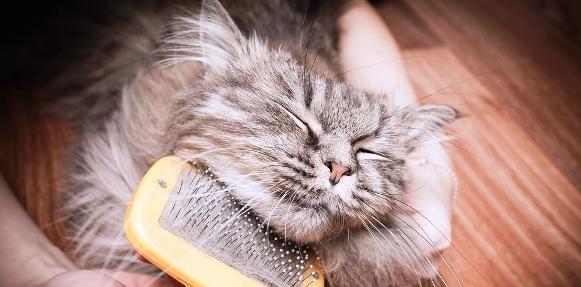 cat-grooming-shutterstock_166275389-1