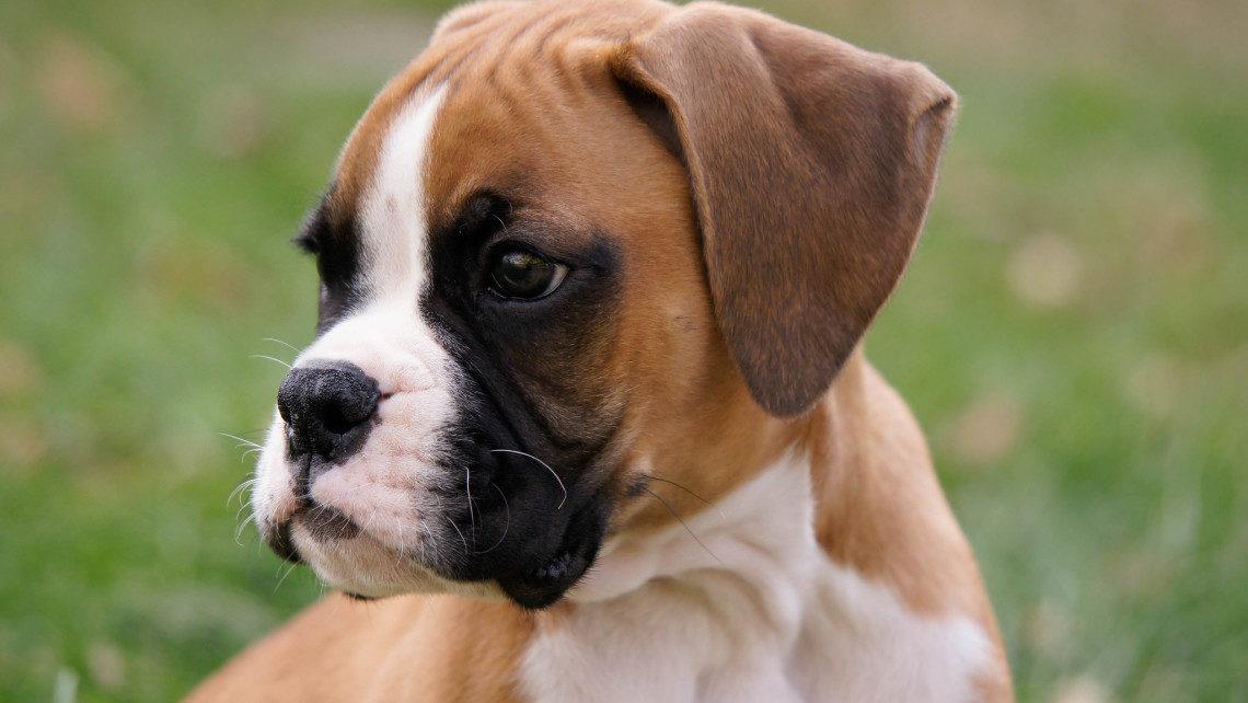 dogsandticks-1140x642