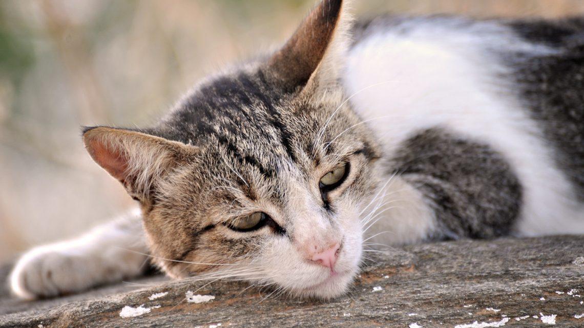 sad-cat-1920x1080