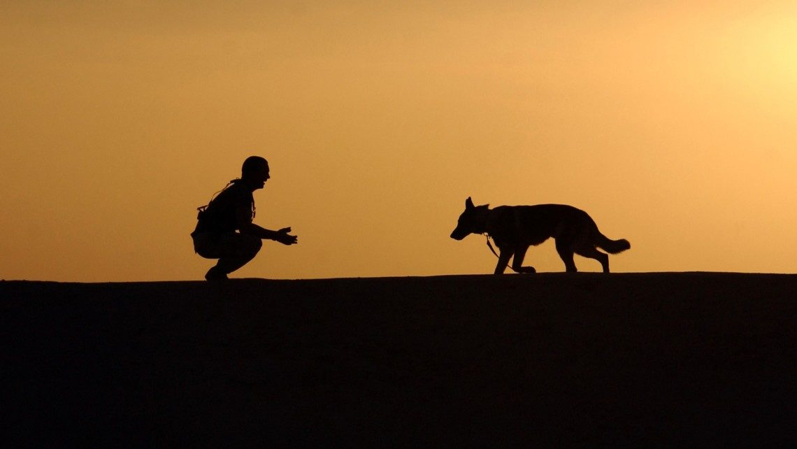 dog-trainer-silhouettes-sunset-38284-1-1140x642