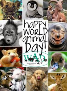 happy-world-animal-day-2016-animals-images-poster-754x1024
