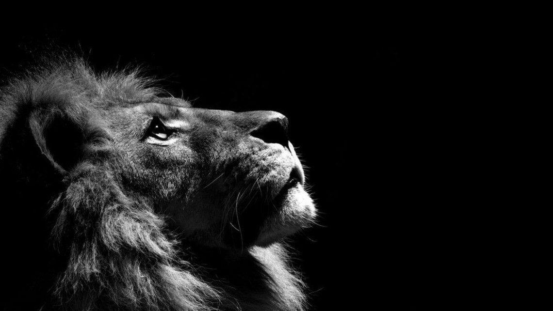 cool-lion-wallpaper-24-1140x642