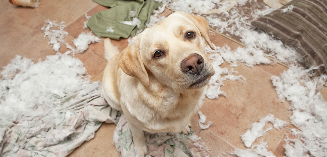 dog-care_common-dog-behavior-problems_overcoming-separation-anxiety_main-image