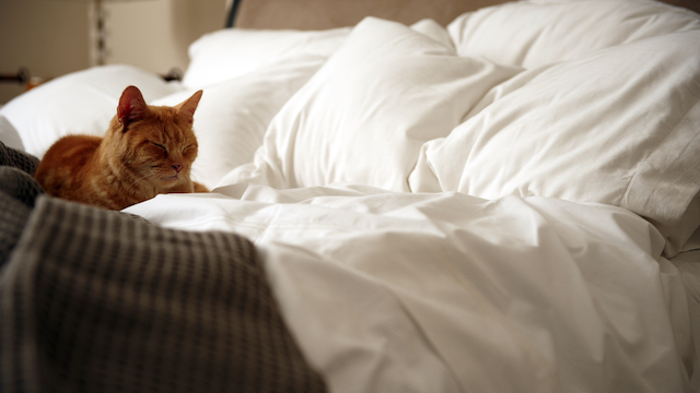 Ginger tabby cat lying on an unmade bed.