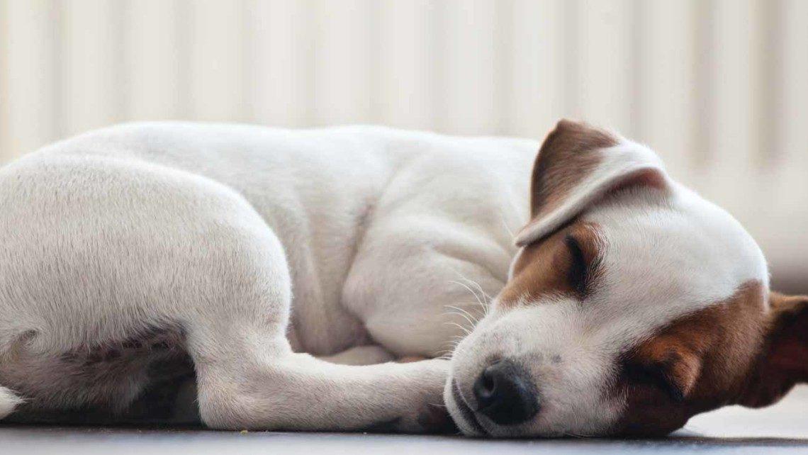 pet-dog-sleeping-1140x642-1