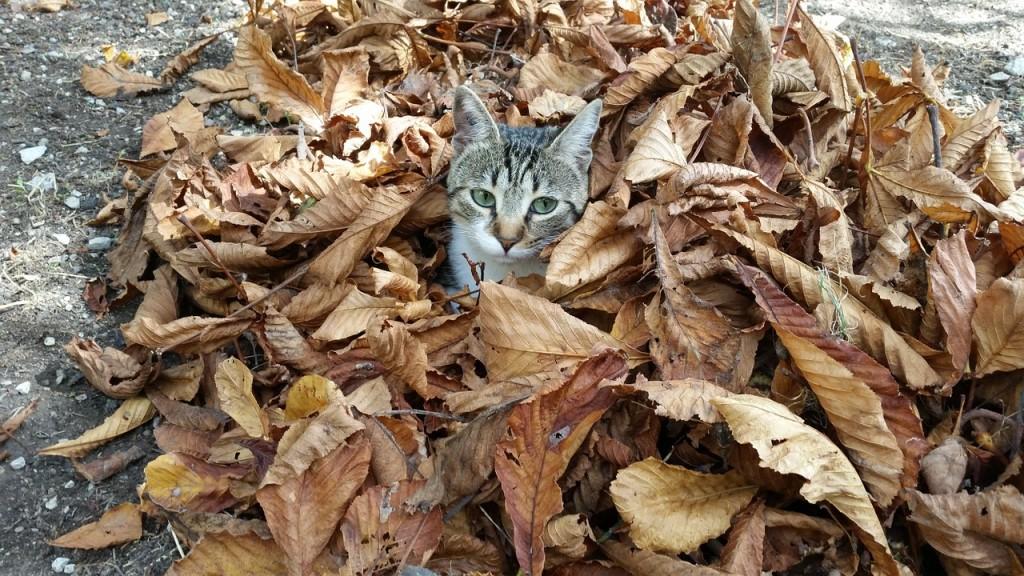 Gato e folhas de Outono