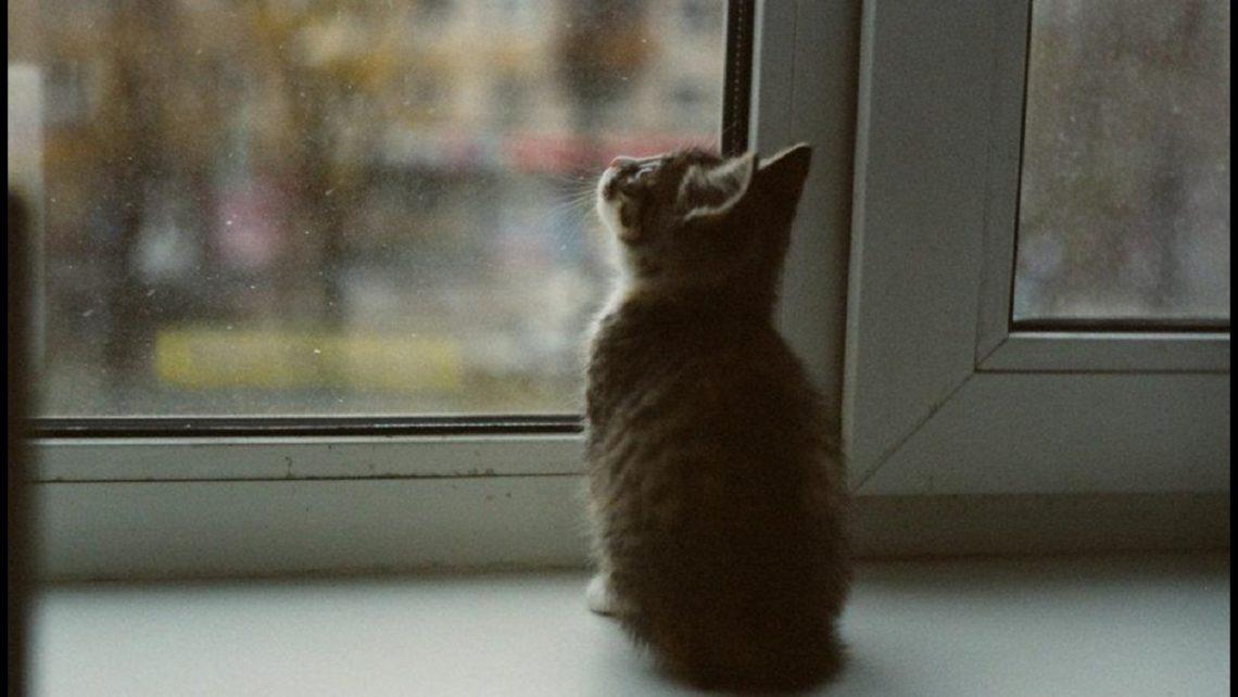 Gato a olhar para a chuva