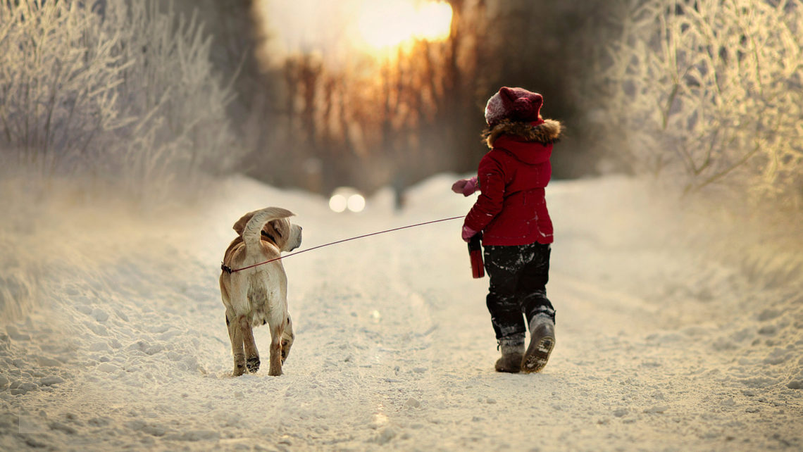 winter-walking-with-dog-1920x1200