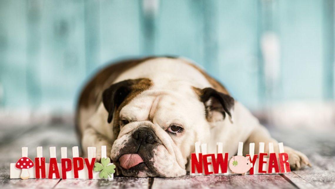 Cão Ano Novo