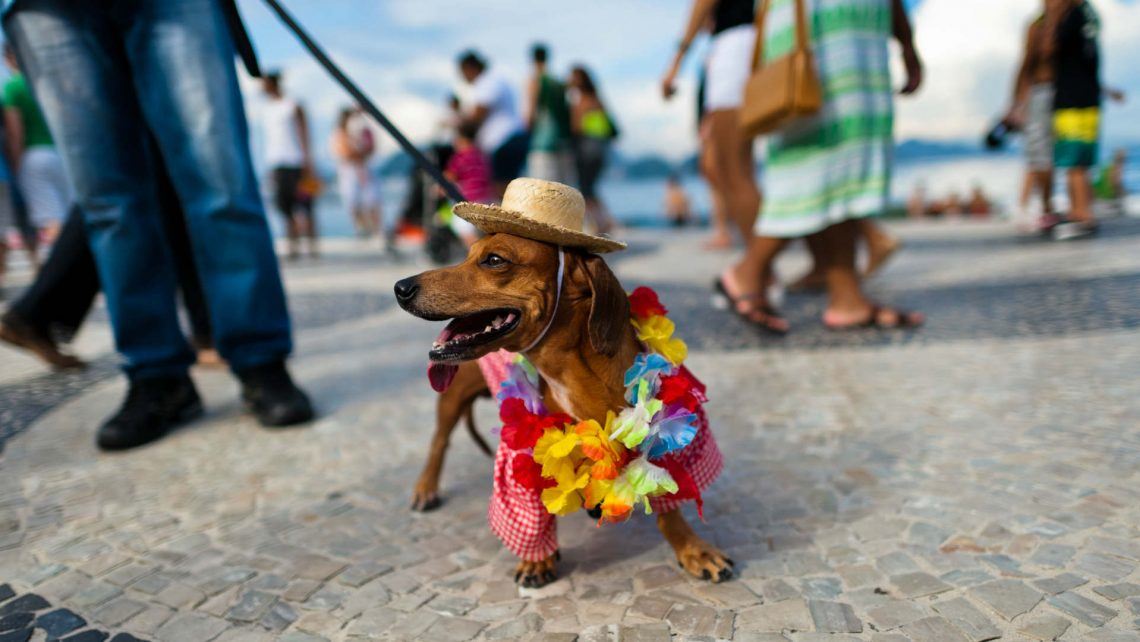 Carnival Pet