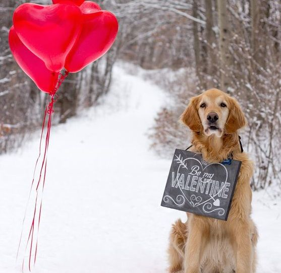 dog-valentinesday