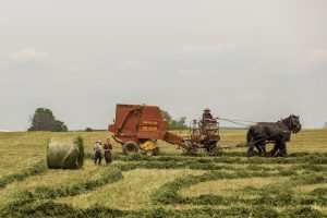 people-field-working-agriculture