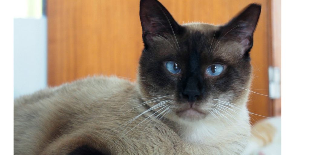 Concorso Design Your Cat : How to treat a cat with gingivitis petable