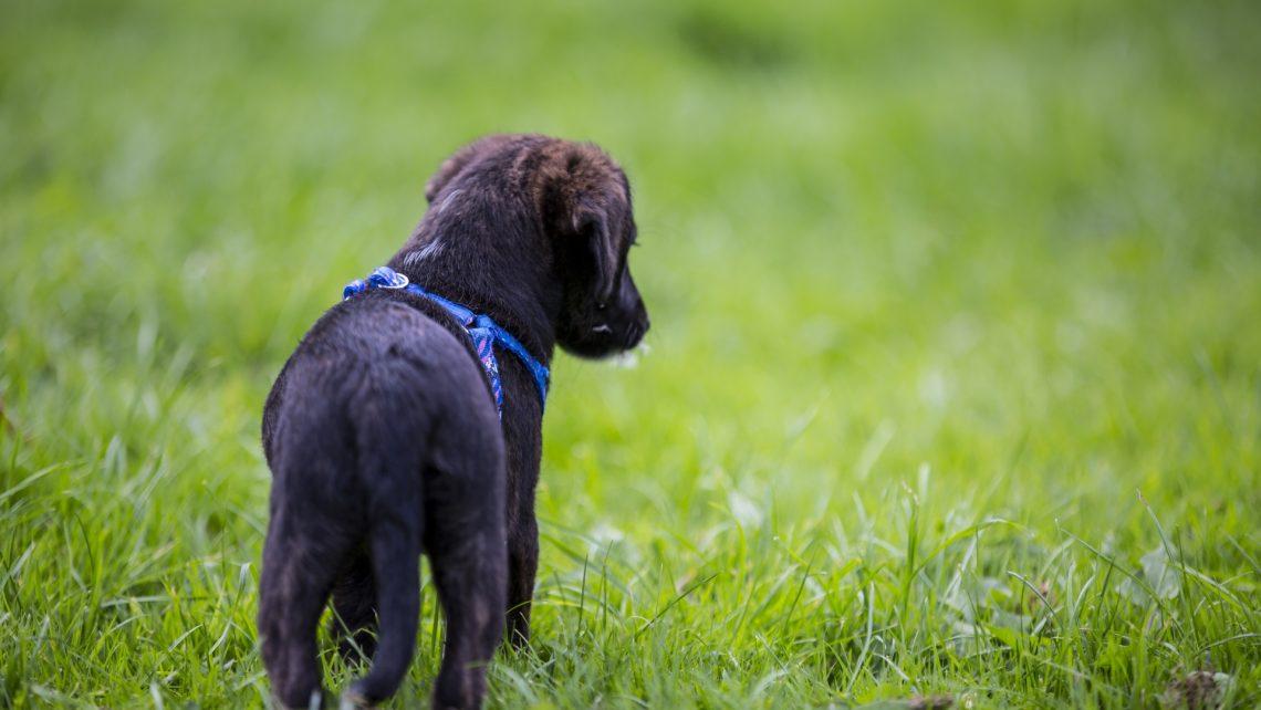 puppy-dog-1475063627li4
