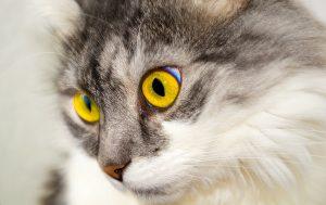 cat-76116_1280