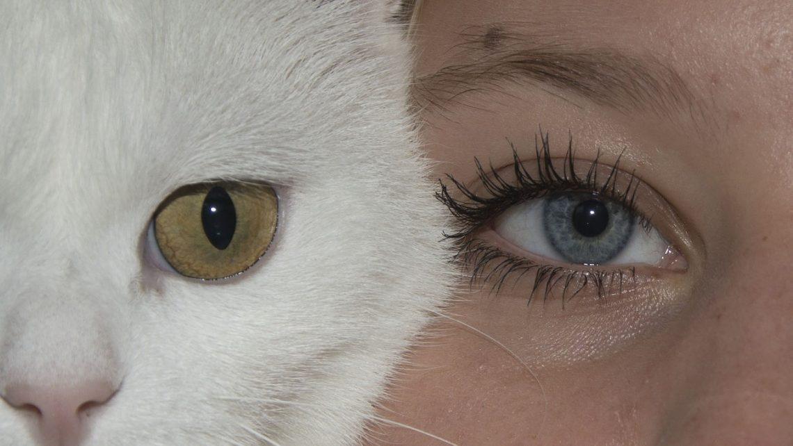 eyes-943122_1280