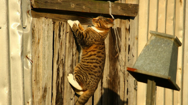 keep-your-cat-fit-2