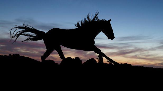 horse-654840_1920