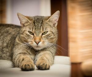 Gato a relaxar com olhos semi-cerrados