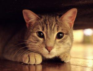 Gato com pupilas dilatadas.