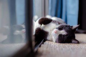 cat-1903024_960_720