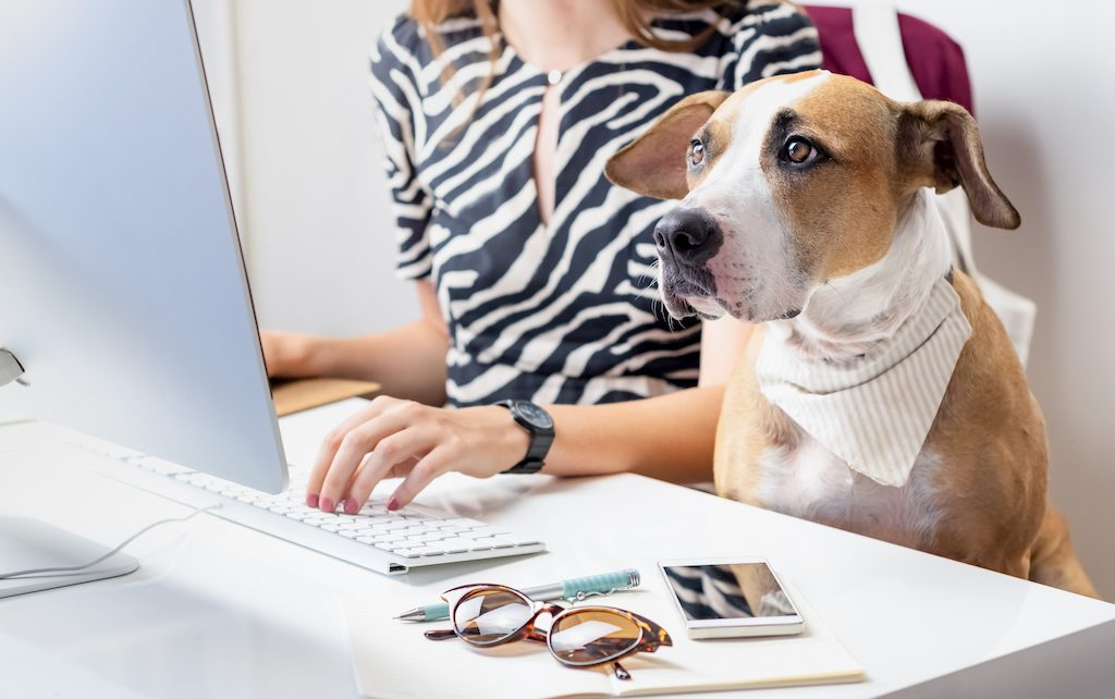 animais no trabalho, cães no trabalho, animais no escritório
