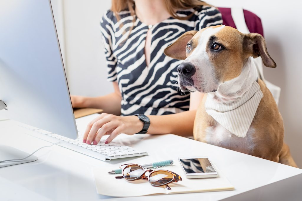 pets at work, pets at office, pet-friendly office