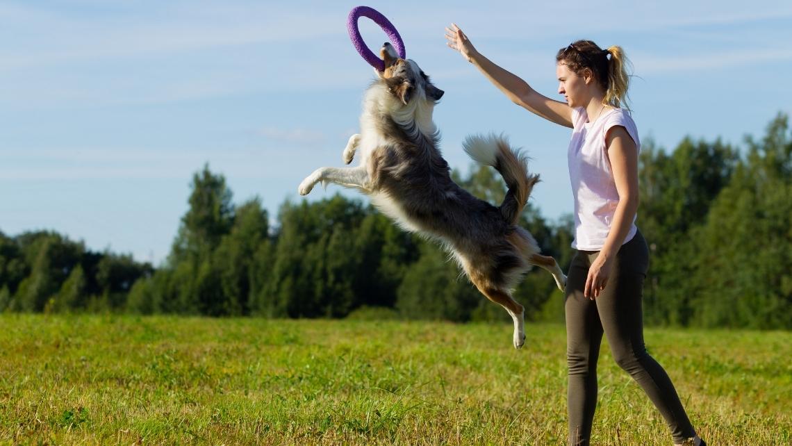 cão salta para apanhar disco com a sua treinadora