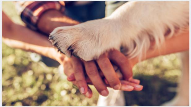 adotar animal estimação
